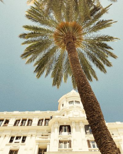 Low angle view of palm tree against building