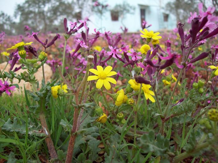 Rural House Spring Spring Flowers Pink Flower Yellow Flower House Rural Flower Purple Plant Nature Flower Head Springtime Pink Color Beauty In Nature Colour Your Horizn EyeEmNewHere