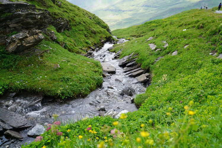 Scenic view of stream flowing through land
