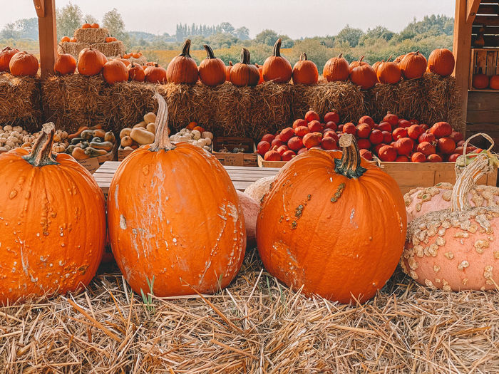 View of pumpkins for sale in field