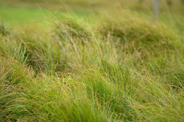 Cereal Plant Agriculture Field Backgrounds Full Frame Uncultivated Close-up Grass Plant Tall Grass Blade Of Grass