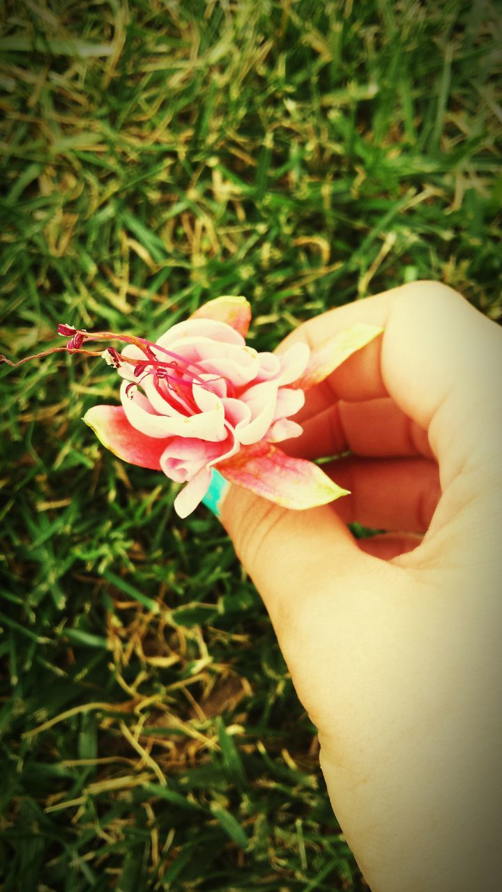 CLOSE-UP OF HAND HOLDING FLOWER IN FIELD