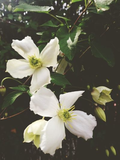 A Couple Flower Head Flower Branch Tree Springtime Petal Leaf Blossom White Color Close-up In Bloom Plant Life Blooming