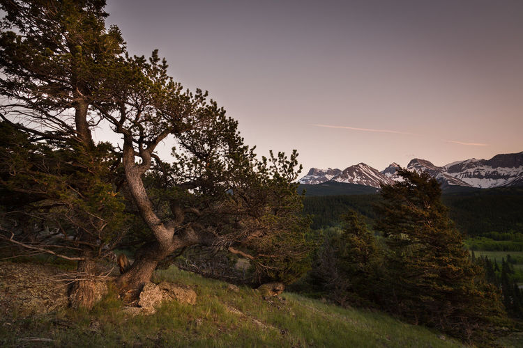 Tree Sunset Alberta, Canada Alberta Canada Al Beauty In Nature Branch Clear Sky Grass Landscape Mountain Mountain Range Nature No People Outdoors Scenics Sky Tranquil Scene Tranquility Travel Destinations Tree