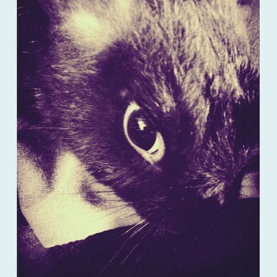 My bunny Rabbit ?? He is so adorable Hello World Bunny  Rabit Thats Mine