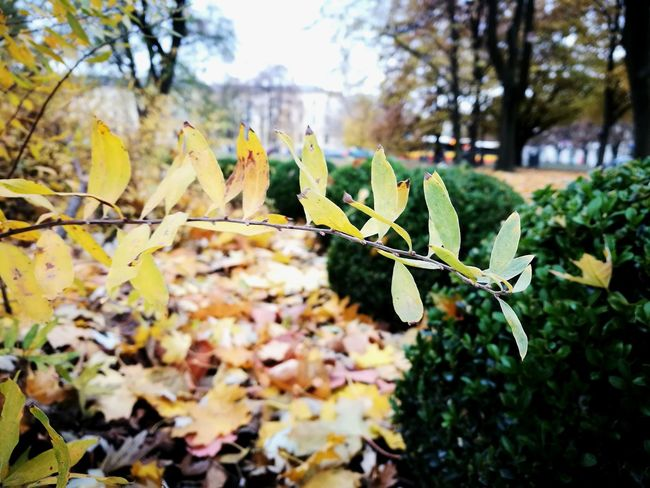 Focus Object Leaf Nature Autumn Beauty In Nature No People Close-up Plant Leaves Green Color Outdoors Tranquility