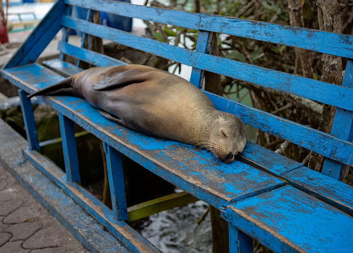 Close-up of seal on bench