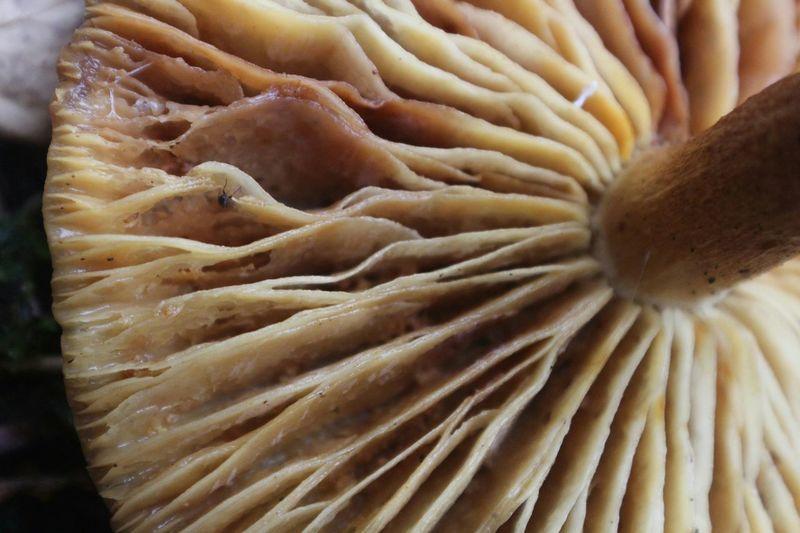 Macro Macro Photography Macro_collection Mushroom Nature Fungi Mushrooms Mushrooms 🍄🍄 Macro Beauty