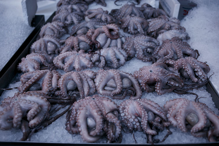 Octopus on ice at the Athens Central Market in Athens Greece. Display No People Octopi Octopus Octopuses Seafood Seafoodporn SEAFOOD🐡 Still Life Tentacles Weird
