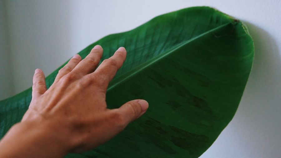 Close-up of hand on green leaves