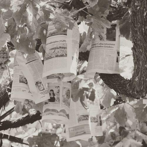 Lecker Wein... SPAIN Restaurant Wine Trees