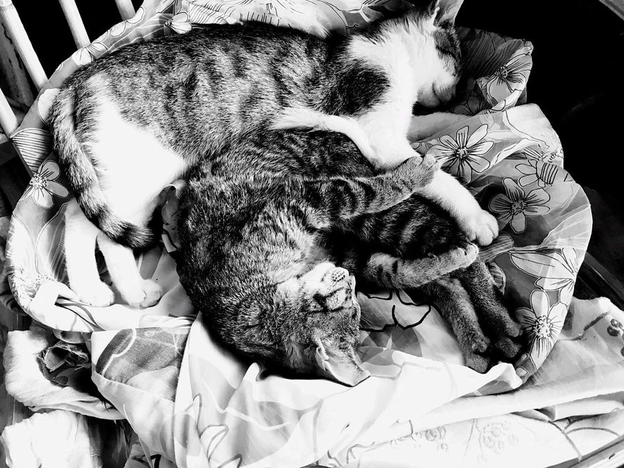 Sweet cats sleeping Animal Themes One Animal Domestic Animals Pets Relaxation Indoors  Sleeping Bed Dog Lying Down Resting Mammal High Angle View Zoology (null)Comfortable Selective Focus Animal Cat Loyalty Feline