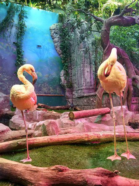 Flamingo Animal Representation Animal Themes. Nature No People Bird First Eyeem Photo животныймир No Edit/no Filter Nofilter EyeEmNewHere Xiaomiphotography EyeEmRussianTeam