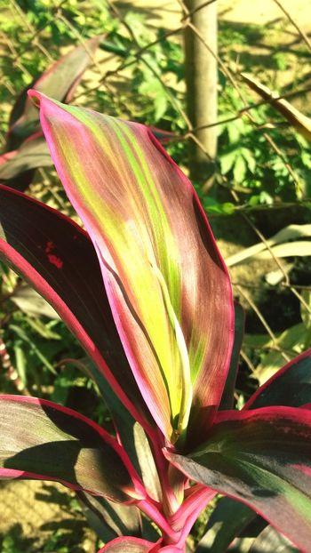 Sunny day ?☀☀ Random Sunny EyeEm Nature Lover In My Garden