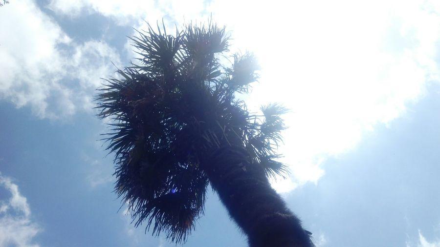Sunbathing First Eyeem Photo Lanscape Palmsprings OpenEdit Photooftheday Picture Cute Sun Sunshine
