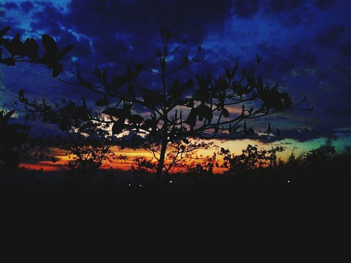 Silhouette trees against dramatic sky at sunset