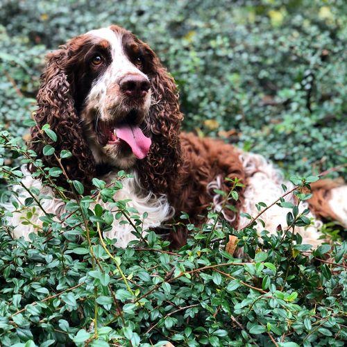 Portrait of a dog lying on land