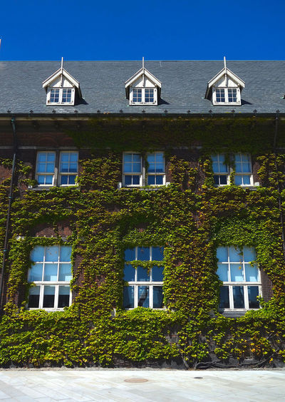 Ivy growing on house against sky
