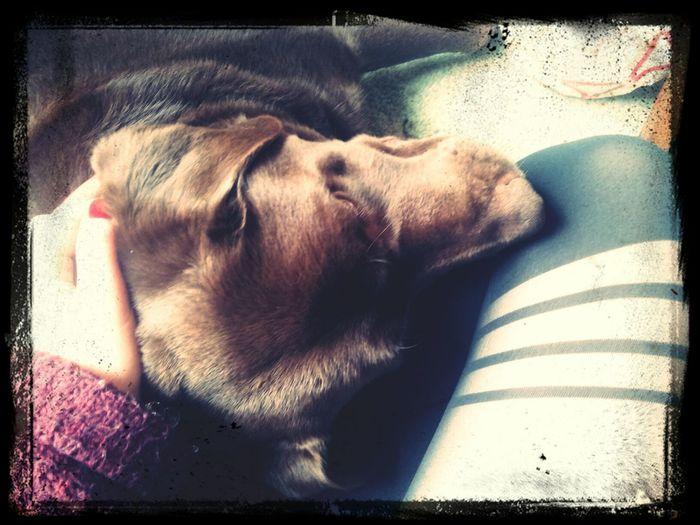 Cuddles with my boy Marley Cuddle Weather❤