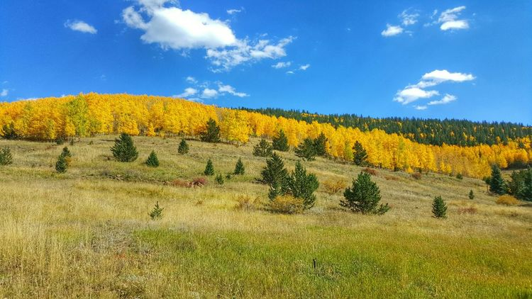 Check This Out Aspens Fall Leaves Fall Color Colorful Colorado Samsung Galaxy S6 Edge Samsungphotography
