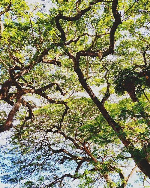Trees Stems Gallefort Randomcapture Randomactsofkindness Awesome Tagsforlikes Likes4likes Likeforlike Instaday Instapic Instatravel