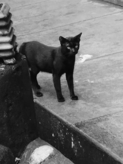 Black Cat Black&white EyeEm Best Shots - Black + White Who Are You ? He Confuse!!?