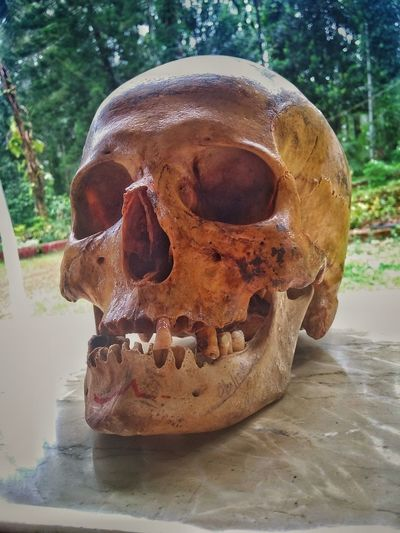 No People Close-up Day Indoors  Medicalcollege EyeEmBestPics EyeEm Gallery EyeEm Best Shots Skull Humanskull Bones