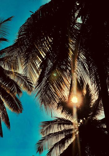 Palm Tree Low Angle View Nature Growth Sky Tranquility