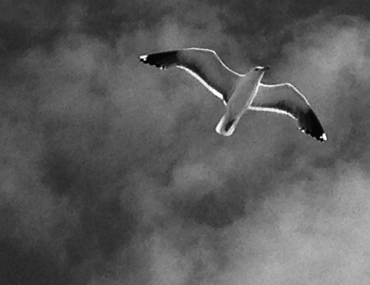 flying, smoke - physical structure, mid-air, animals in the wild, one animal, spread wings, animal themes, no people, animal wildlife, bird, motion, low angle view, outdoors, day, sky, nature