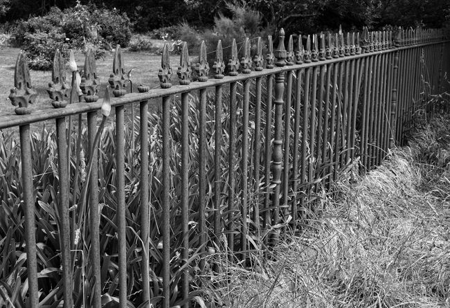 the old fence 👍🙋🐝🐝 Old Fence Iron Fence Black And White From My Point Of View Blackandwhite Photography On The Other Side EyeEm Nature Lover Check This Out Kiwi Clicker EyeEm Best Edits Tadaa Community Eye4photography  Good Morning Getting Inspired Hello World EyeEm Best Shots Enjoying Life New Zealand Scenery Exploring Boundary Picket Garden Photography Today's Hot Look Photography In The Garden