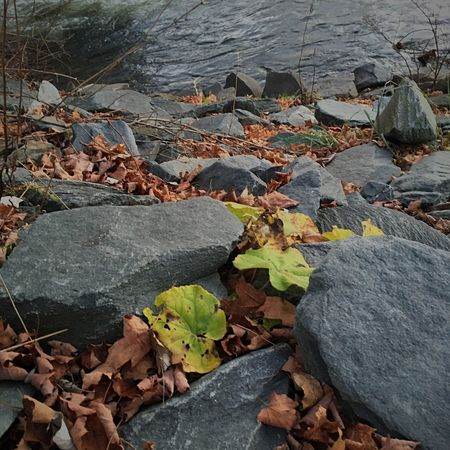 Rocks And Water Stony Path Autumn Nature Outdoors Water Leaf No People Close-up Leaves Rock - Object Beauty In Nature Stream - Flowing Water Road Cold River Waters Edge Shore Shoreline Rocks Edge No People, Daytime Photography Eyeem Photo