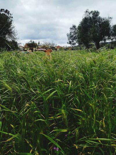 Tree Agriculture Rural Scene Sky Cloud - Sky Cultivated Land Farm Plantation Farmland The Great Outdoors - 2018 EyeEm Awards