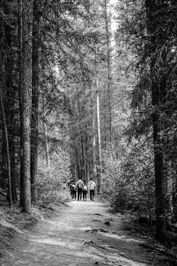 hiking through Banff Blackandwhite Monochrome Hill Trees Trail Path People Hiker Banff National Park  Tree Men Women Water