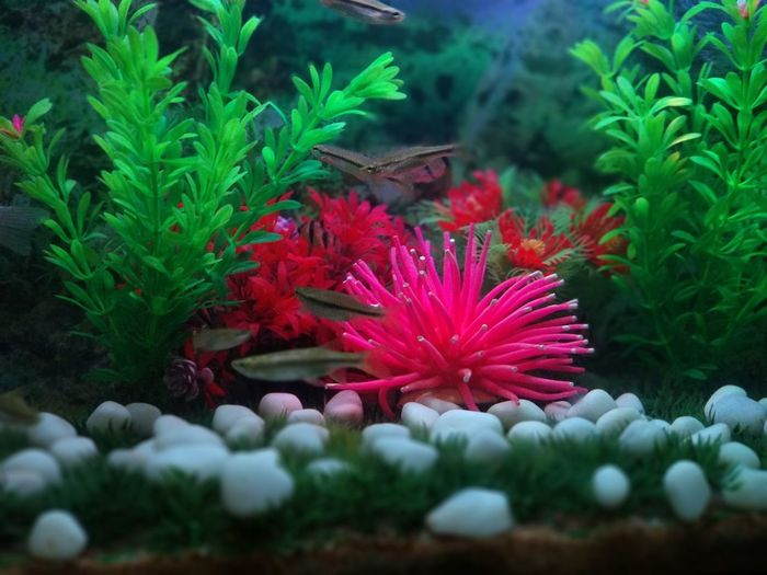 Natural in a Artificial World Fish Aquarium Aquarium Photography Pencil Fish UnderSea Flower Landscape Plant Fish Tank Tropical Fish
