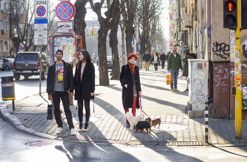 View of dogs on street in city