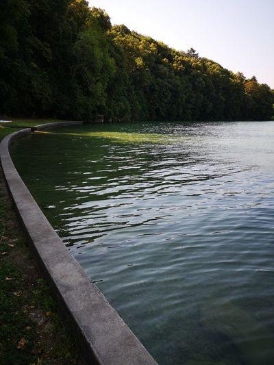 Tree Water Lake Swimming Sunset Sky Landscape Grass