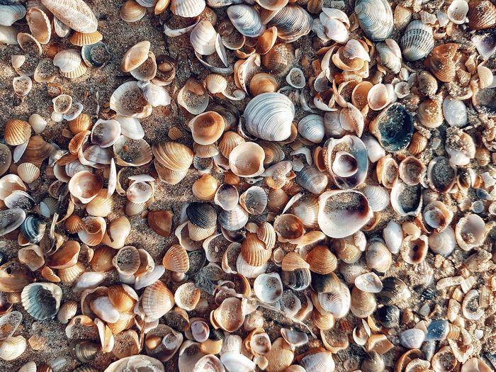 Full frame shot of shells on shore