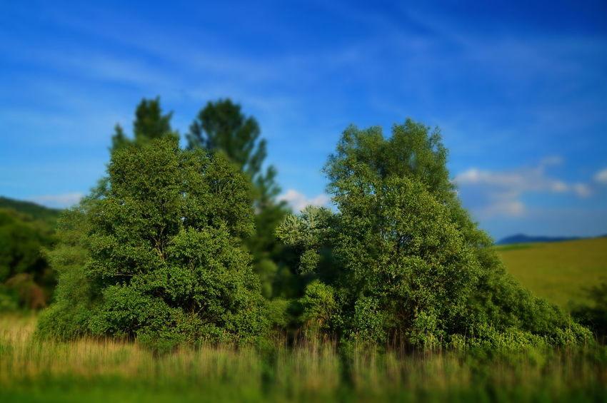 Green vegetation at the lake, tilt shift Tilt-shift Beauty In Nature Blue Sky Day Forest Green Color Growth Lakeside Landscape Nature No People Outdoors Pilis Pilisszántó Scenics Sky Special Strange Summer Tiltshift Tranquil Scene Tranquility Tree