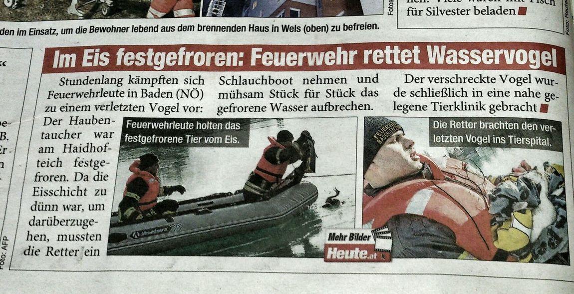 Zeitungsartikel Die Gute Nachricht Tierrettung Feuerwehr Haubentaucher Vogel Gerettet ausschnitt aus der gratis Zeutung Heute