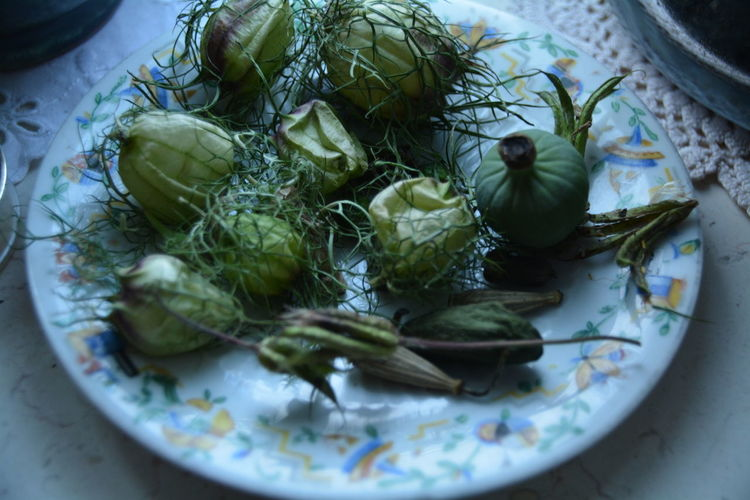 High angle view of plant pods with herb in plate on table