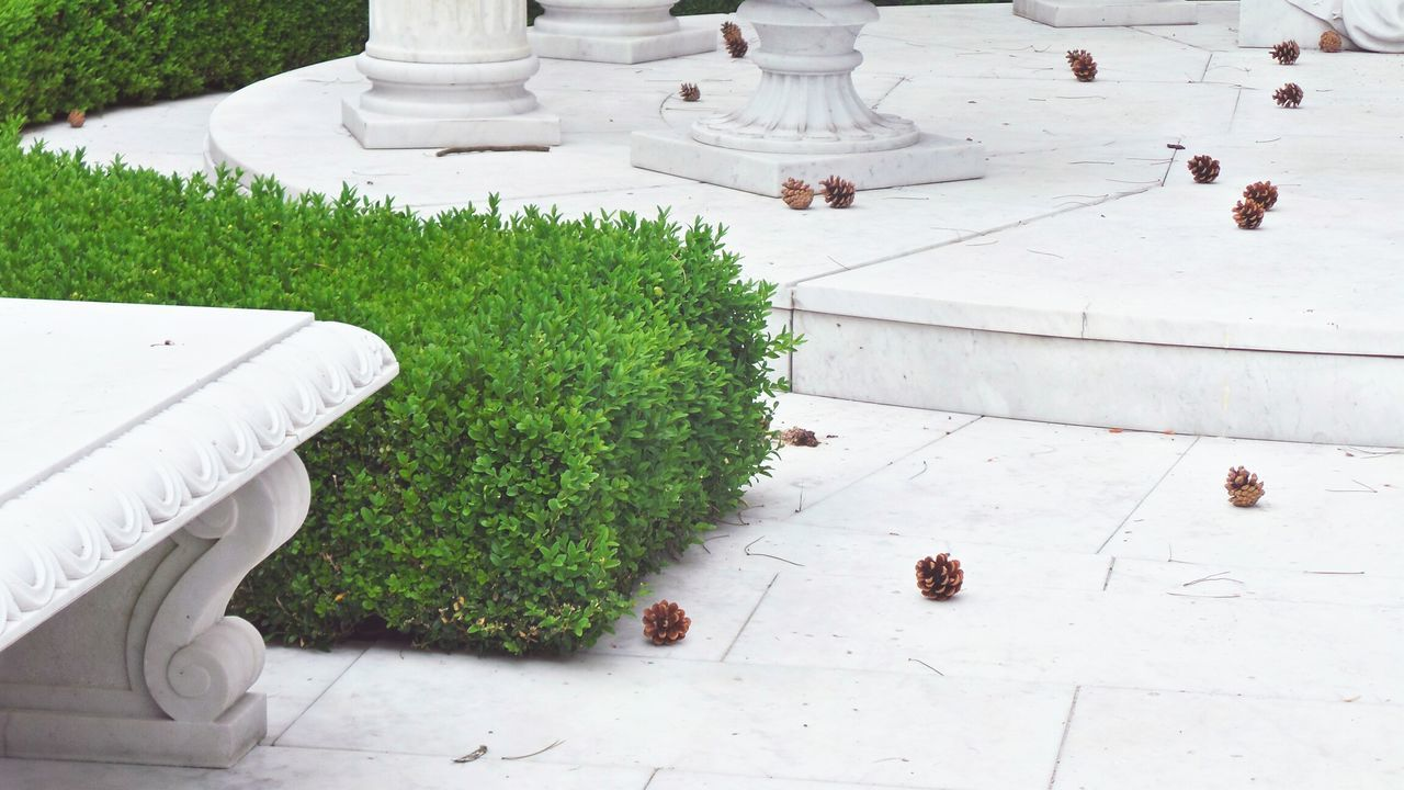 View of fallen pine cones on the floor