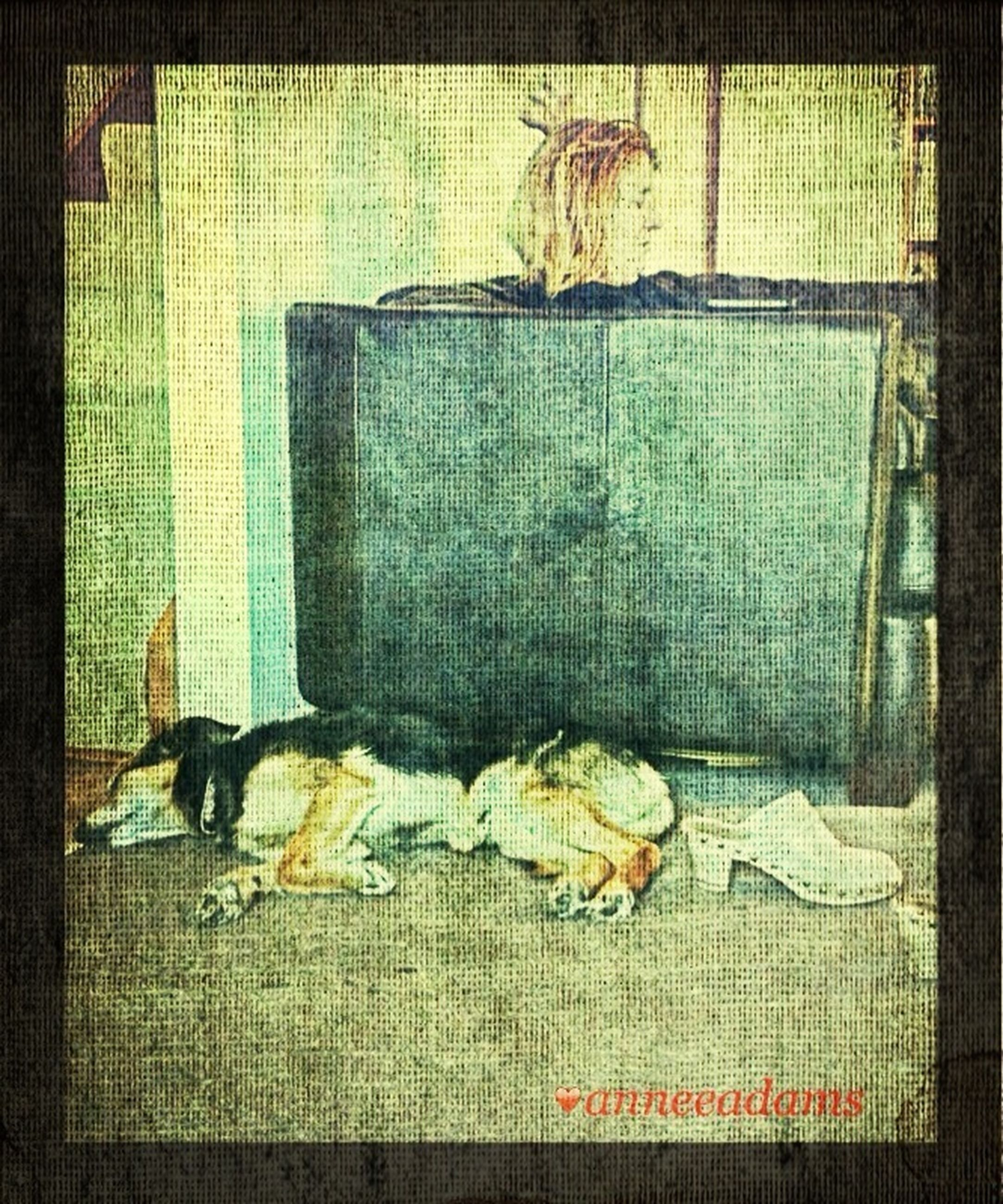 transfer print, auto post production filter, domestic animals, indoors, full length, pets, animal themes, relaxation, mammal, one animal, wall - building feature, sitting, sleeping, built structure, domestic cat, dog, resting, architecture