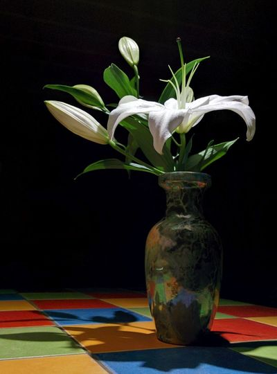 on the spotligh! Flowers Mypointofview Lonely Loneliness No People Colorful darkness and light