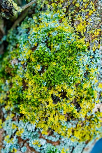 Star moss Sternmoos Beauty In Nature Close-up Day Full Frame Fungus Green Color Growth Lichen Moss Nature No People Outdoors Plant Star Moss Starmoss Textured  Tree Tree Trunk