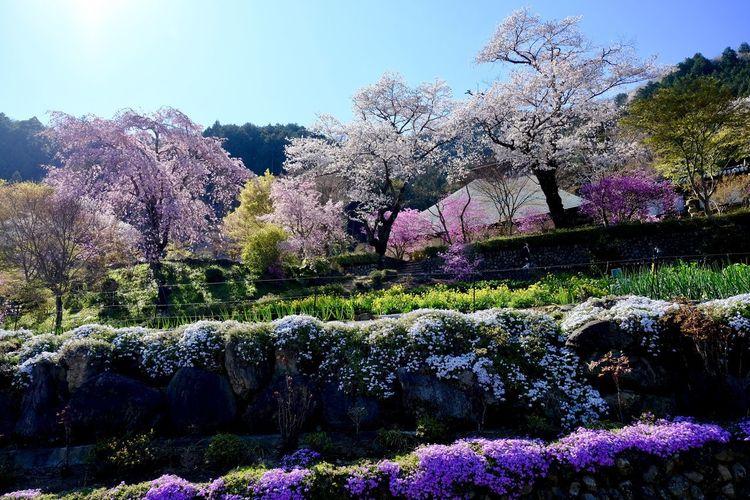 View of flowering trees in park against sky