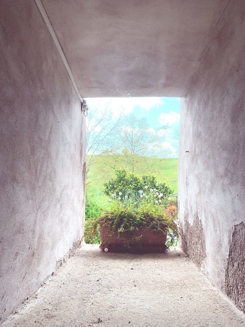 architecture, built structure, wall - building feature, the way forward, no people, day, direction, plant, indoors, building, nature, tree, empty, entrance, sky, window, tunnel, arch, wall, ceiling, concrete