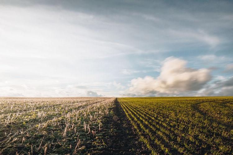 Field Nature Rural Clouds Crops Farming Landscape Rural Scene Sky