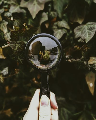 Cropped hand holding magnifying glass by leaves