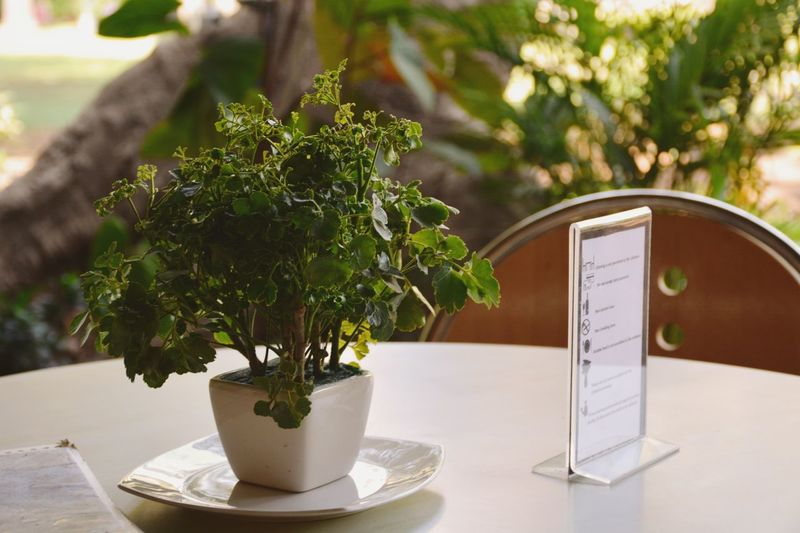 Leaves Table Plant On Table Restaurant Table White Green And White Saucer White Pot Mud Small Plant Articles Table Plant Waiting Got Bored Lol Green Coffe Table Things Airport Departure Area Vase Flower Pot Flower Arrangement Thinking Plant Life