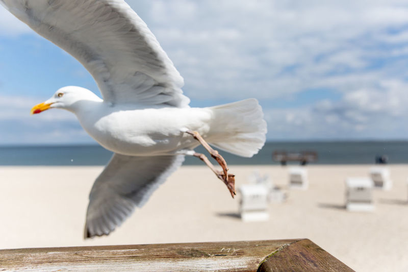 Animal Themes Animal Wildlife Animals In The Wild Beach Beach Chairs Beach Life Beauty In Nature Bird Close-up Day EyeEmNewHere Flying Gull Gulls And Sea Gulls In Flight Horizon Over Water Nature No People One Animal Outdoors Sea Seagull Sky Spread Wings Water